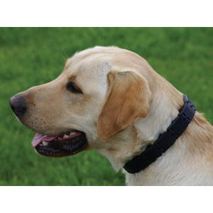 collar triple crown pinchos perros adiestramiento